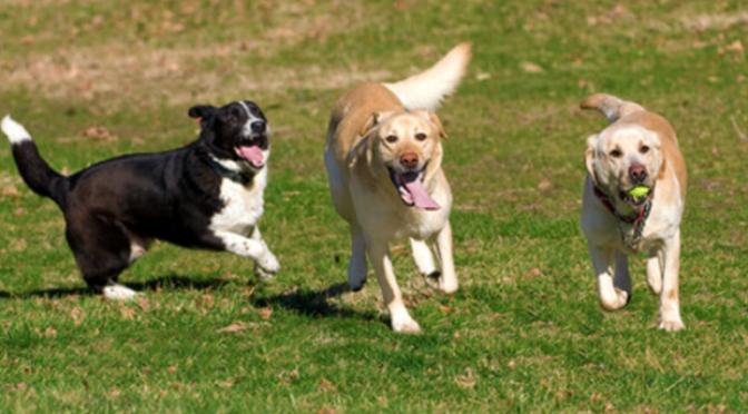 Nuova area sgambatura cani a Comeana